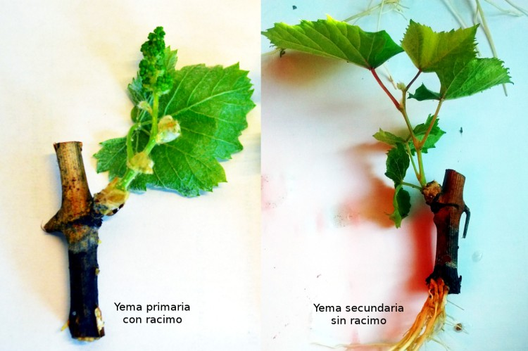 comparacion-fertilidad-yprimaria-vs-ysecundaria